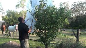 How To Keep Squirrels Away From Your Yardmp4  YouTubeHow To Protect Your Fruit Trees From Squirrels