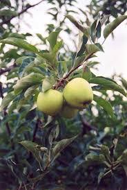 Beautiful Fruit Tree Nursery North Carolina Part  1 26 Best Fruit Tree Nursery North Carolina