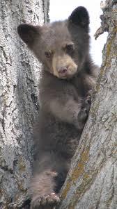 Black Bear Outdoor Alabama