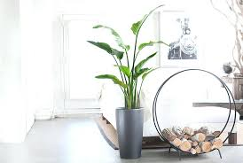 tall house plant best indoor plants for men best tall indoor plants low light