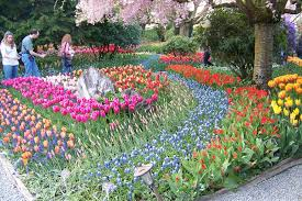 homey design bulb garden design samuels bulb garden tulips