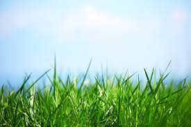 grass and sky backgrounds. Contemporary And Green Grass Intended And Sky Backgrounds O