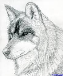 Drawn Wolf How To Draw A Wolf Head Mexican Wolf Step 10 Wood Burning