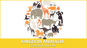Animal Flow Chart Ks2 Kingdom Animalia Classifying Animals Mensa For Kids