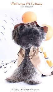 pet costumes kim byers diy ewok costume