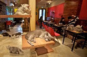 Kết quả hình ảnh cho cafe thú cưng