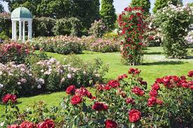 Small Picture Roses in the garden design Wilson Rose Garden