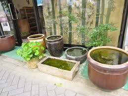 container water garden tended.wordpress.com