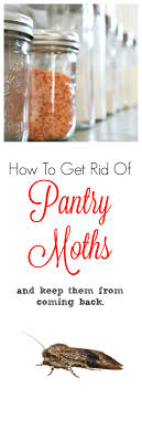 Small Moths In Bedroom How To Get Rid Of Pantry Moths Keep Them From Returning