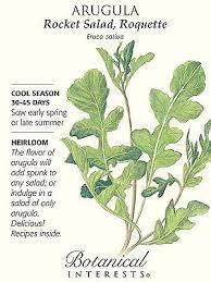 rocket salad arugula