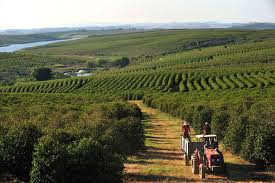 It was a way for farmers to rise out of poverty. The Joy Of Java 5 Best Coffee Tours In Costa Rica Wide World Of Travel