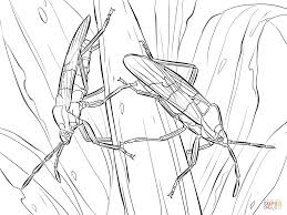 Small Picture Large Milkweed Bugs coloring page Free Printable Coloring Pages