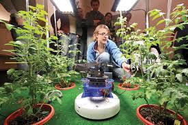 indoor tomato garden. Lighting To Growing Indoor Tomato Garden