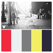 'Urban Terrier' Pop Color Palette for Pet Brand Inspiration  '
