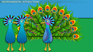 artificial selection in evolution video lesson transcript why natural selection acts on phenotype not genotype