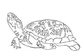 Small Picture Box Turtle Coloring SheetsTurtlePrintable Coloring Pages Free
