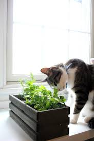 cat grass garden with herbs cats can eat