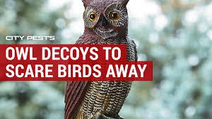 using owl decoys to scare birds away