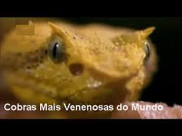 Resultado de imagem para IMAGENS DE COMIDA DO GABÃO