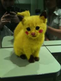 cute kittens in halloween costumes. Fine Halloween Check Out These Hilarious Halloween Costumes For Your Cat With Cute Kittens In E