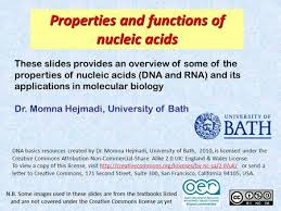 Functions Of Nucleic Acids Lecture 2 Properties And Functions Of Nucleic Acids Ppt