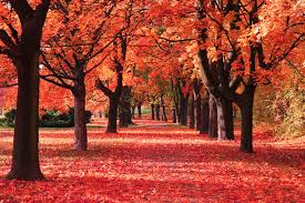 Autumn Leaves HD Wallpapers New Tab ...
