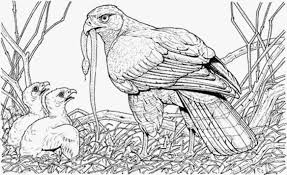 Coloring Pages Eagle Coloring Book Bald Eagle Coloring Page