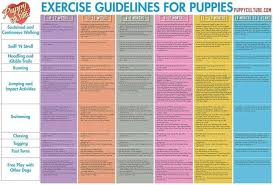 Puppy Exercise Guide Puppy Schedule Training Your Puppy