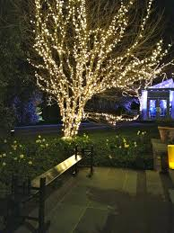 Outside Trees With Lights The Welcoming House And The Fabulous Party Outdoor Tree