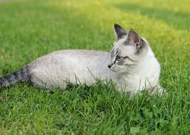 What Can I Give My Cat For Allergies?   Canna-Pet®