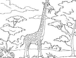 Giraffe Coloring For Kids Giraffe Coloring Page Giraffe 6920
