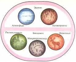 Биосфера Живые организмы на Земле Микроорганизмы