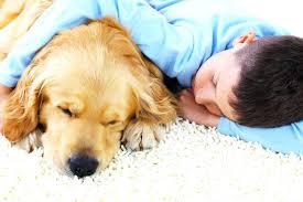 pet proof carpeting area rugs rug pad 1 dog pet proof area rugs dog rug throw pad a