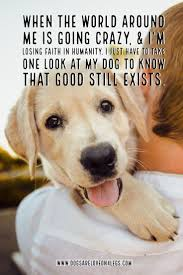 Dog Quote When The World Around Me Is Going Crazy Dog Dog