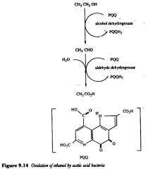Industrial Production Of Vinegar Flow Chart Fermentation Process Of Vinegar Microbiology