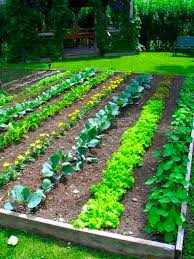 Small Picture Back to Eden gardening is all about natural farming methods using
