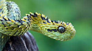 cute snake wallpaper. Perfect Cute Snakes Images Snake HD Wallpaper And Background Photos For Cute Wallpaper