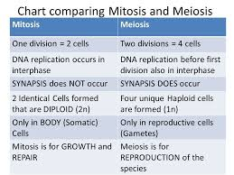 Mitosis And Meiosis Comparison Chart What Is The Main Difference Between Mitosis And Meiosis