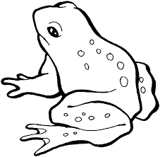 Frog Color Pages For Kids Activity