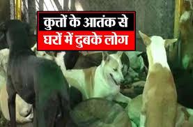 Image result for सीतापुर में कुत्तों का आतंक