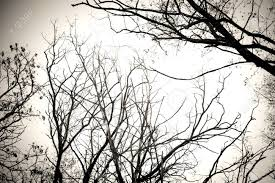 Tree branches no leaves black and white. Dry dead trees isolate white  background. Tree