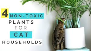 Terrific Plants Non Toxic To Cats 76 About Remodel Interior Decor Home With