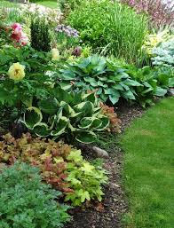 a lovely shade garden of hostas and c bells by mae
