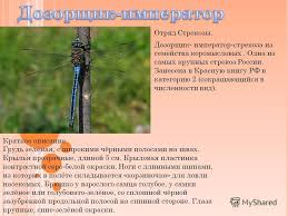 Презентация на тему Насекомые занесённые в Красную книгу России  3 Отряд