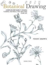 botanical drawing a step by step guide
