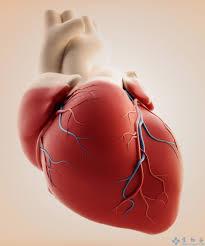 「心臟再生」的圖片搜尋結果
