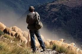 Resultado de imagem para imagens de pastores