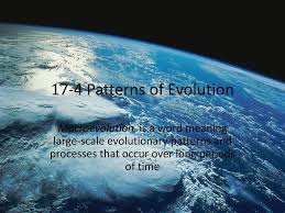 174 Patterns Of Evolution