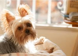 Does Reflexology Benefit Dogs
