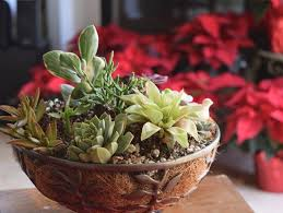 growing succulents succulents in pots garden design calimesa ca